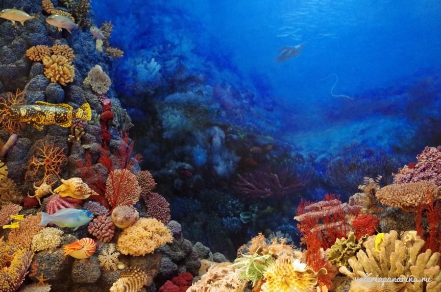 Подводный мотоцикл – новое развлечение на пляже Байзай