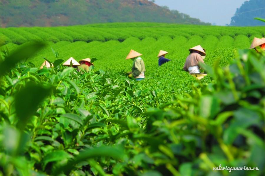Баолок – город чая, кофе и шелка