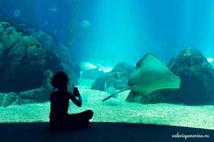 Океанариум Чи-Нгуен: путешествие в морские глубины на борту корабля-призрака