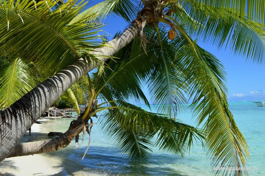 Кокосовый рай провинции Бенче
